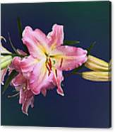 Lovely Pink Lilies Canvas Print