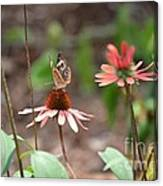 Lover Of Coneflowers Canvas Print