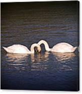Loving Swans Canvas Print