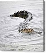 Low Country Marsh Alligator Canvas Print