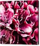 Low Key Pink Azalea Canvas Print