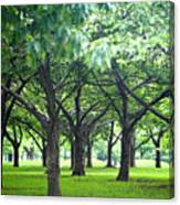 Low Trees In Flushing Meadows-corona Park Canvas Print