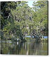 Lowcountry Landscape II Canvas Print