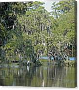 Lowcountry Landscape Canvas Print