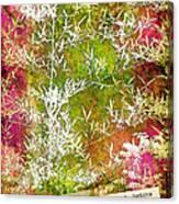 Lucky Bamboo Canvas Print
