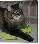 Lucky The Cat Canvas Print