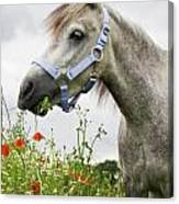 Lulu In The Poppy Field Canvas Print