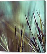 Luminis 02 - S01a Canvas Print