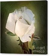 Luminous Grace Canvas Print
