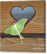 Luna Moth In Love Canvas Print