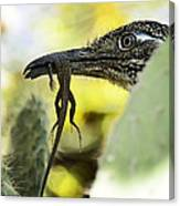 Lunch With A Roadrunner  Canvas Print