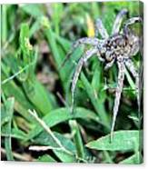 Lurking Spider In The Grass Canvas Print