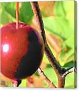 Luscious Fruit Canvas Print
