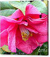 Luscious Pink Hdr Canvas Print
