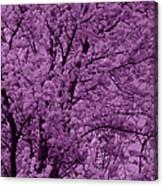 Lush Lavender Canvas Print