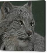 Lynx Painterly Canvas Print