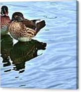 Ma And Pa Wood Duck Canvas Print