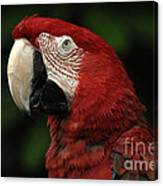 Macaw In Red Canvas Print