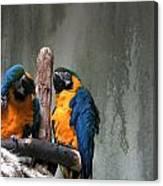 Maccaw Parrots Canvas Print