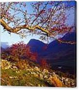 Macgillycuddys Reeks, County Kerry Canvas Print