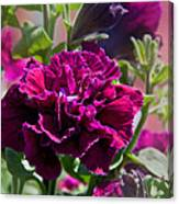 Maco Petunia Flower Double Burgundy Madness Art Prints Canvas Print