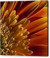 Macro Blumen Canvas Print