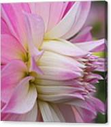 Macro Flower Profile Canvas Print