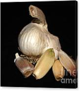 Macro Garlic Canvas Print