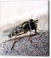 Macro Insect Canvas Print