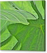 Macro Leaf Structure Canvas Print