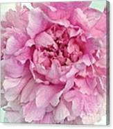 Macro Peony Abstract Canvas Print