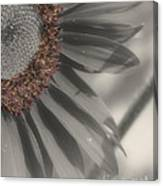 Macro Sunflower In Partial Color Canvas Print