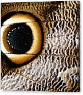 Macrophotograph Of Owl Butterfly Wing Canvas Print