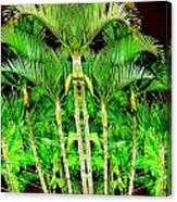 Madagascar Canvas Print