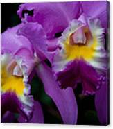 Maddie's Orchid Canvas Print
