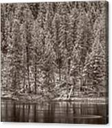Madison River Yellowstone Bw Canvas Print