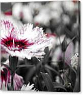Magenta Flower Canvas Print