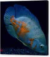 Magic Fish Name Oscar  Canvas Print