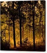 Magic Shadow Of Tree Canvas Print