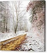 Magic Trail Canvas Print