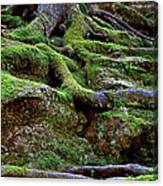 Magical Roots At Sabbath Day Canvas Print