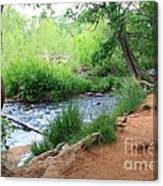 Magical Trees At Red Rock Crossing Canvas Print