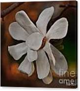 Magnolia Bloom Canvas Print