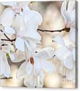 Magnolia Spring Canvas Print