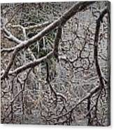Magnolia Tree Branches Covered With Ice No.3834 Canvas Print