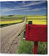 Mailbox On Country Road, Tiger Hills Canvas Print