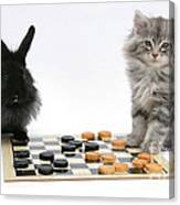 Maine Coon Kitten And Black Rabbit Canvas Print