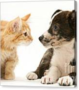 Maine Coon Kitten And Mongrel Dog Canvas Print