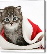 Maine Coon Kitten Canvas Print