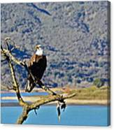 Majestic Eagle Canvas Print